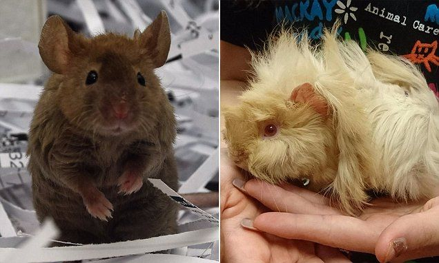 Hoarders to blame for spike in animals to RSPCA #DailyMail