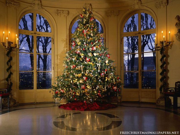 Luxuriant Christmas Tree Wallpaper