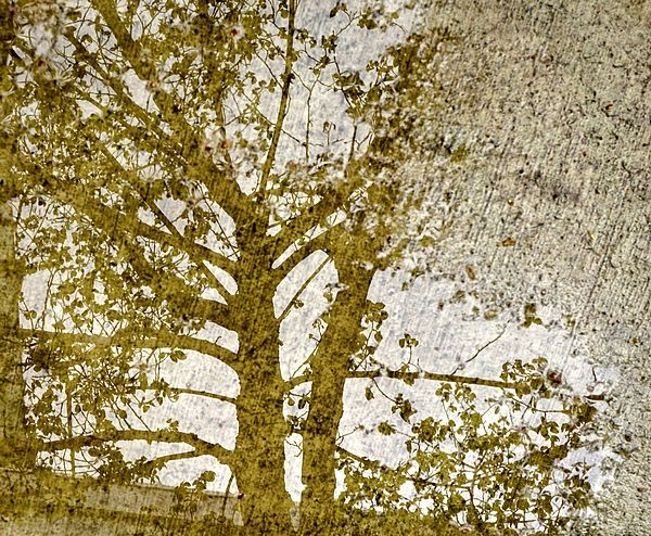 Sepia coloured reflection of tree in puddle on concrete sidewalk