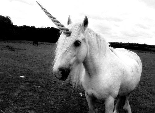 Unicorn - still one of my favorite things from when i was little, hinse why I have a tattoo on me forever.