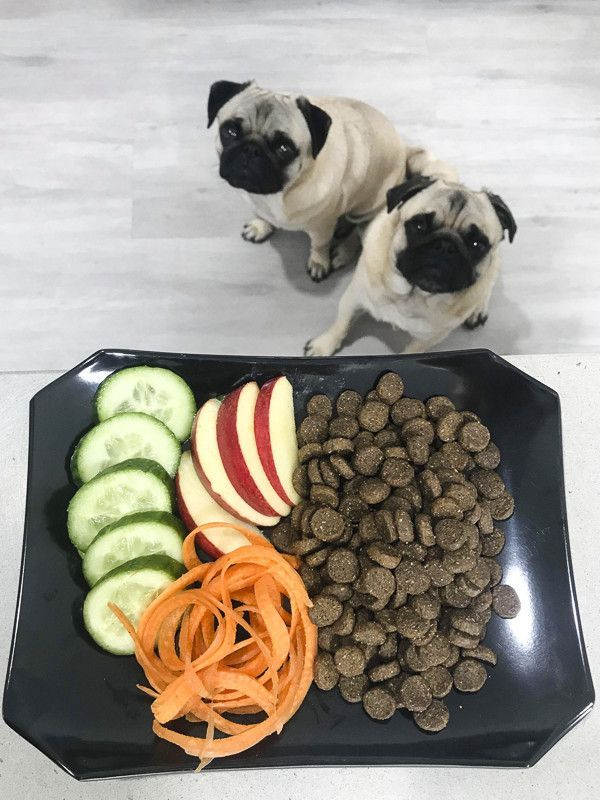 7 Ways To Improve Kibble For Your Pug Best Puppy Food Dog Food