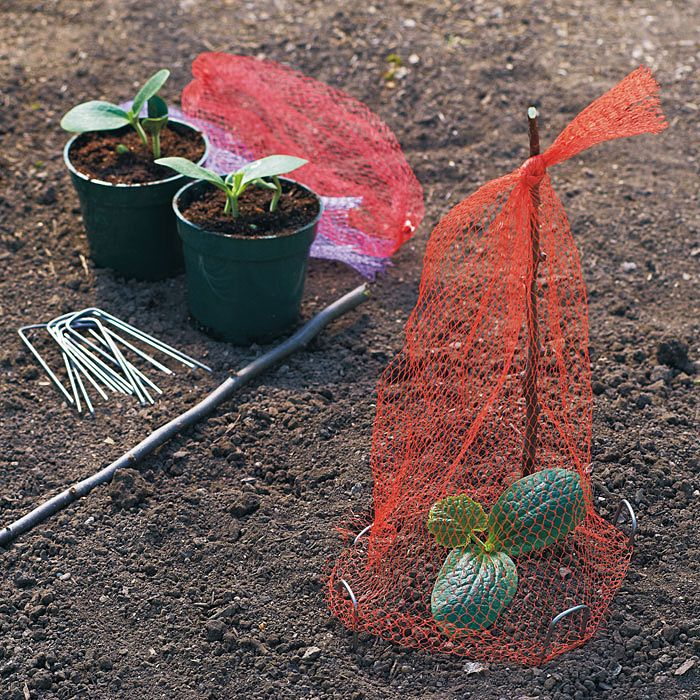 Use leftover veggie nets to protect seedlings!
