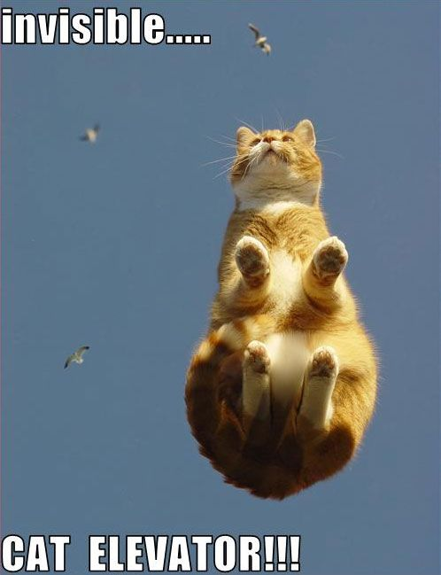 funny invisible cats  | 25 Funny Pictures of Cats with Invisible things – DesignSwan.com