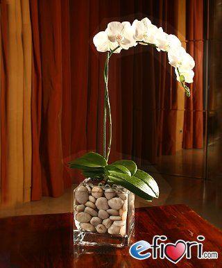 phalaenopsis in vaso di vetro - Cerca con Google
