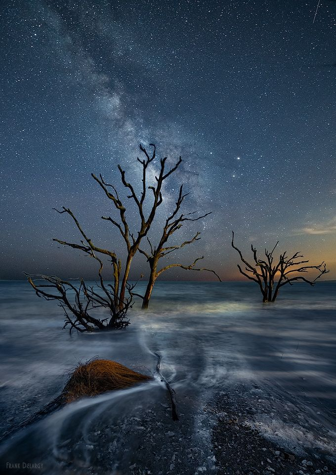 Dead Forest - Dead forest on the beach at Botany Bay in South Carolina. Beautiful dead forest of oaks and palms covered by the surf at high tide. The area is closed at dark so needed to move down the beach a few miles for night sky.