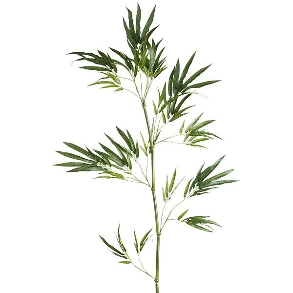 Pier 1 Imports Green Faux Bamboo Branch (£8.24) ❤ liked on Polyvore featuring home, home decor, floral decor, flowers, plants, filler, green, branches home decor, asian home decor and green home decor