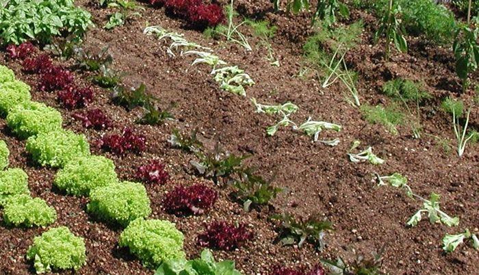 #Fertirrigazione #biologica di piccoli #orti in terra e #piante in vaso