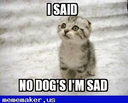 Cool Meme in http://mememaker.us: Sad cat dog