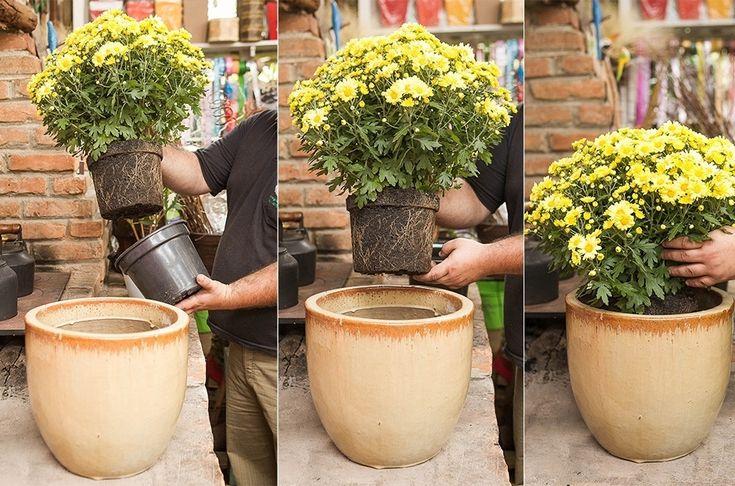 Plante margaridas e alegre a sua casa nos dias de calor - Casa e Decoração - UOL Mulher