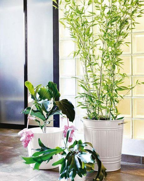 M s de 1000 ideas sobre plantas de bamb en pinterest - Plantas decoracion interior ...