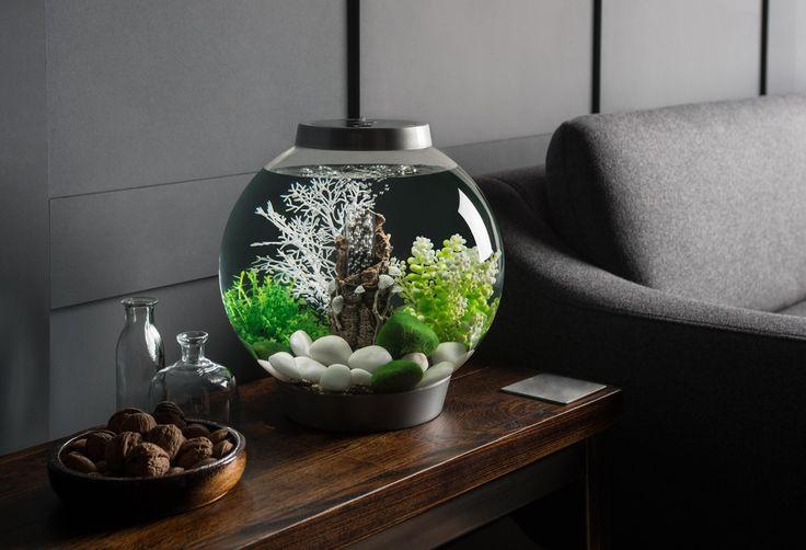 biOrb CLASSIC 15 with green natural decor #biOrb #aquarium #inspiration #design #interiordesign #decor #pebbles #fish