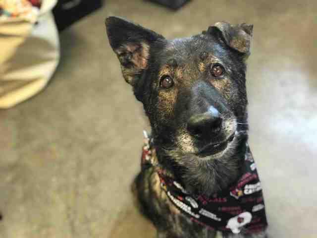Adoptable Pets From Arizona Humane Society And Maricopa County Animal Care 10 2 19 Humane Society Animal Shelter Animals