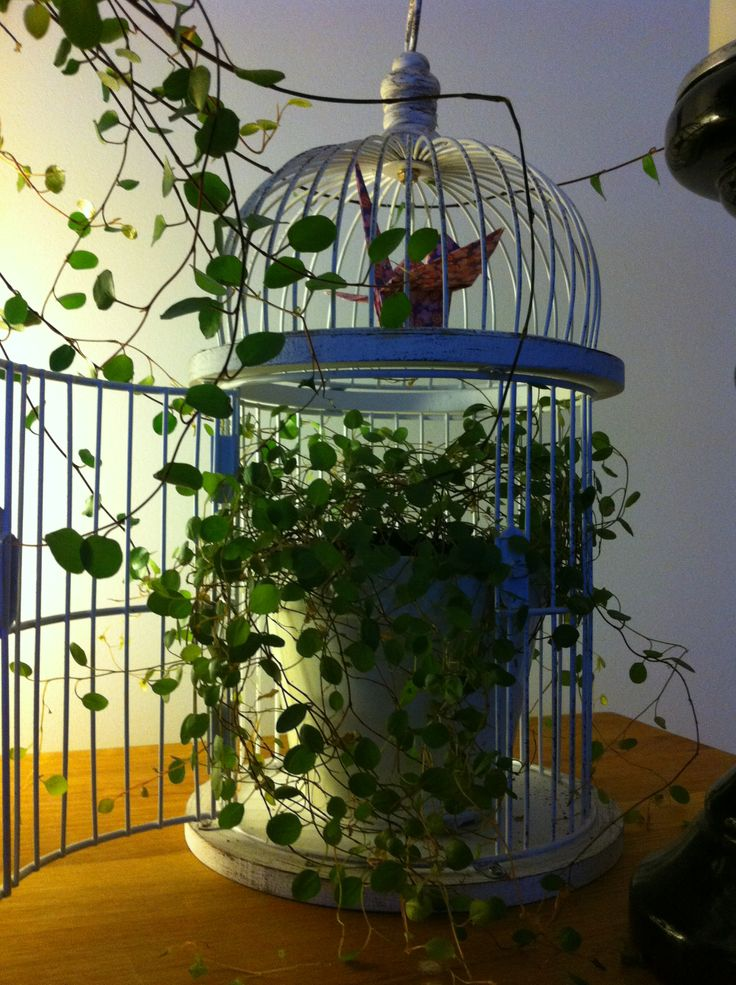 my little bird cage with plant