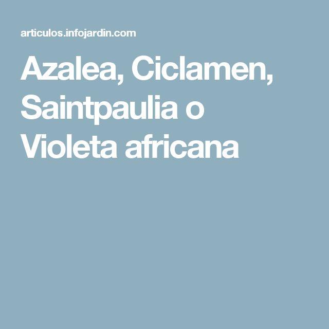 Azalea, Ciclamen, Saintpaulia o Violeta africana