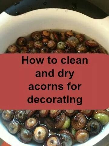 How to clean and dry acorns for decorating craft ideas for How to preserve acorns for crafts