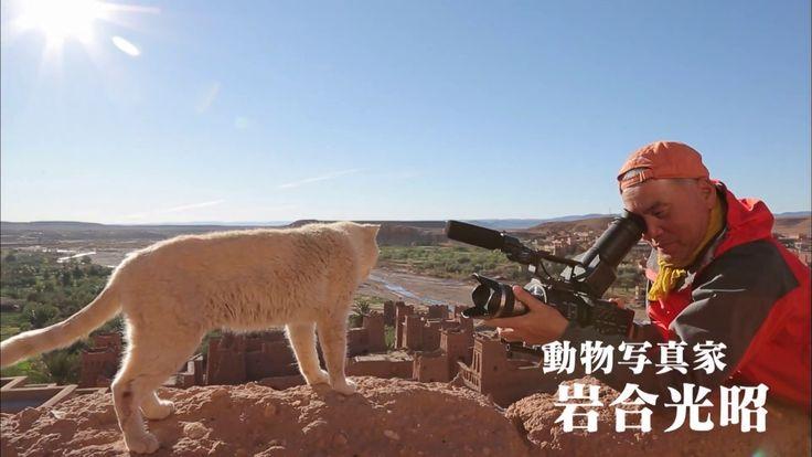 劇場版 岩合光昭の世界ネコ歩き 特報 あの岩合光昭さんの「世界ネコ歩き」が劇場版になって上映中です。 今や日本は猫ブーム。 ブームになる前から、岩合さんのネコ歩きは見てました。 劇場版で、大きなスクリーンで観ると、また違って面白いかもですね。 シェアしました。