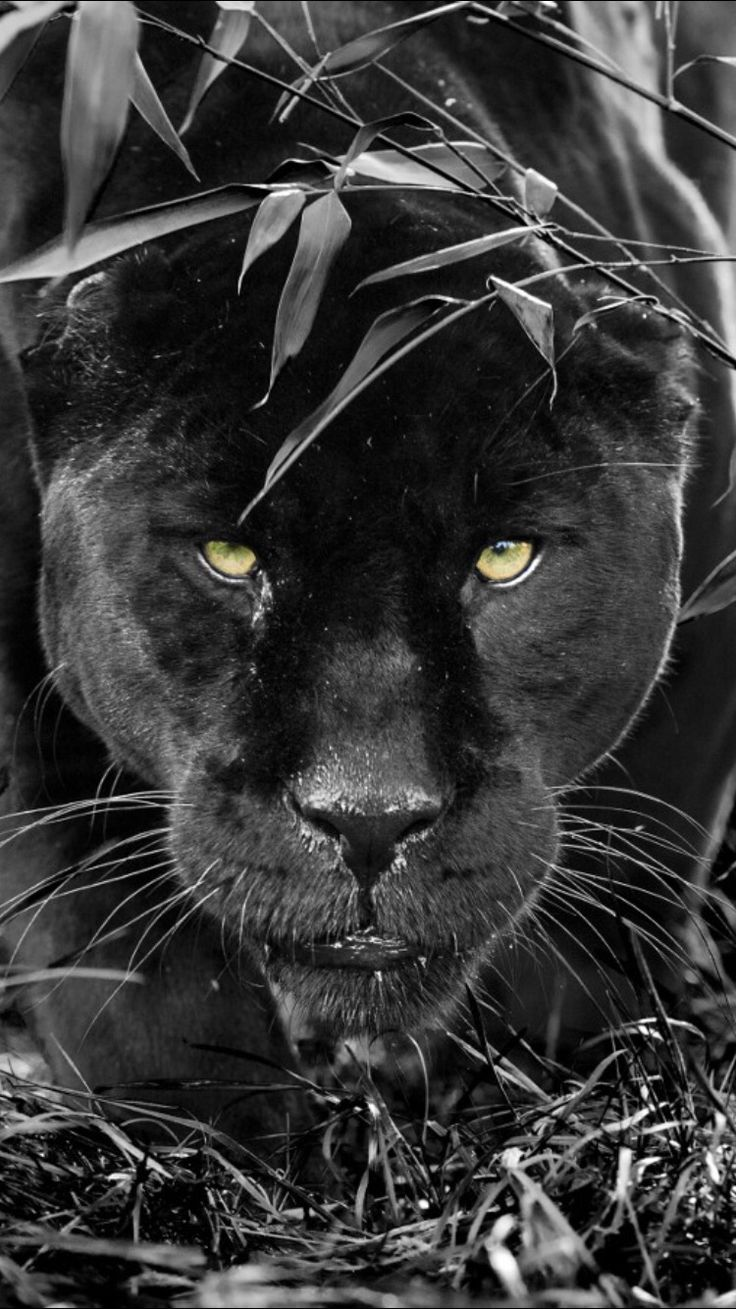 """Amazing puma ❤❦♪♫Thanks, Pinterest Pinners, for stopping by, viewing, re-pinning, & following my boards. Have a beautiful day! ^..^ and """"Feel free to share on Pinterest ♡♥♡♥#fashionandclothingblog ❤❦♪♫!♥✿´¯`*•.¸¸✿♥✿´♥✿´¯`*•.¸¸✿♥✿´¯`*•.¸¸✿♥✿"""