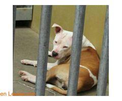 Jaula 39 ℹ   Albergue Insular de animales de GC en Bañaderos:   Contacto:  609850897 / 928170401   Horario:  L-V: 10:00-12:00 / 16:00-18:30  S-D: 9:00-14:00   #Adopción  Contacto y Info: Pulsar la foto o aquí: https://leales.org/animales-en-adopcion/perros-en-adopcion/jaula-39_i3694    Acerca de esta publicación:   Esta publicación NO ha sido creada por Leales.org y NO somos responsables de su contenido.  Ha sido publicada gratuitamente por un usuario en la multiplataforma Leales.org y…