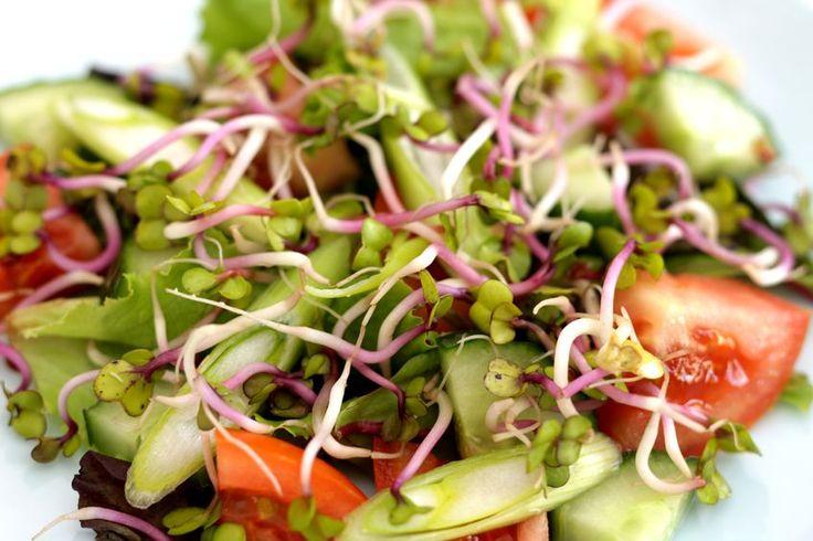 Las mejores recetas con germinados