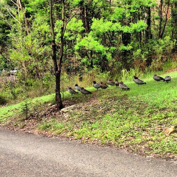 Lane Cove National Park Park in Sydney, Australia.