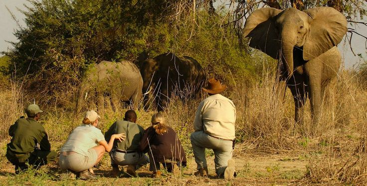 Walk with the friendly giants of Africa