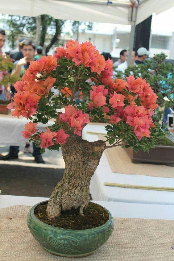 Bonsai #TheGreatVacay #bonsai #China