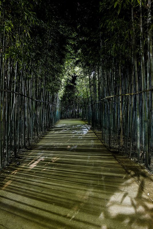 Bamboo Path near Daegu south Korea