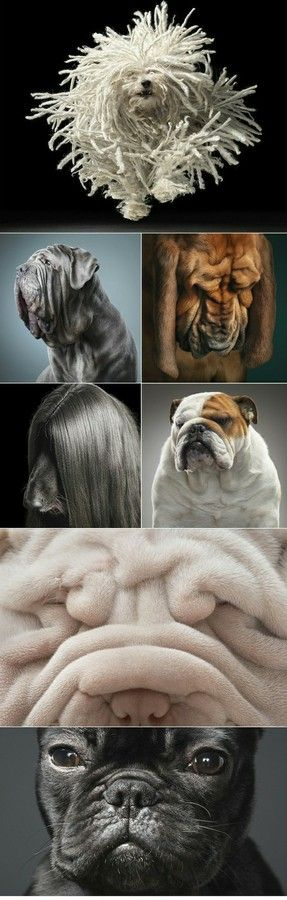 especially love the wrinkly ones. much more huggable and imperfectly perfect
