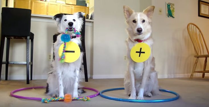 Science is great, dogs are great and dogs teaching science is incredible and amazing! Have you ever thought that chemistry is so boring or otherwise not cute enough, and it doesn't make you feel interested. Well then you need to take a look at this video where these two adorable dogs teach chemical bonds, they are so cute! If …