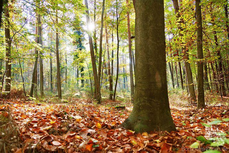 Herbst auf Bornholm #herbst #autumn #nature #wald #woods #bornholm
