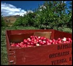 Davidson Orchard in Vernon, BC. Love visiting in the fall!!