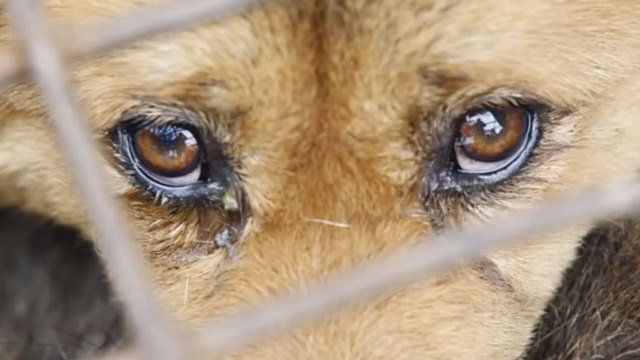 Petition · Members of Parliament of Canada: Stop the Torture and Suffering of Helpless Animals in China · Change.org