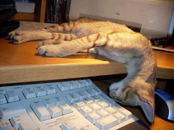 https://i.pinimg.com/736x/fe/35/4f/fe354f982f2cf63f743f6a522dbb7e15--animal-humor-blog.jpg
