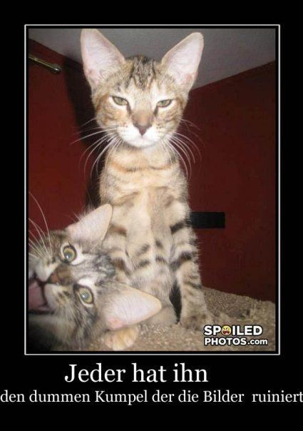 544 best lustige sachen images on pinterest funny animal funny pets and funny pics