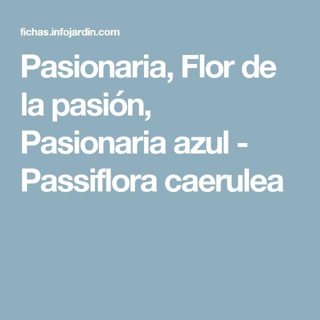 Pasionaria, Flor de la pasión, Pasionaria azul - Passiflora caerulea