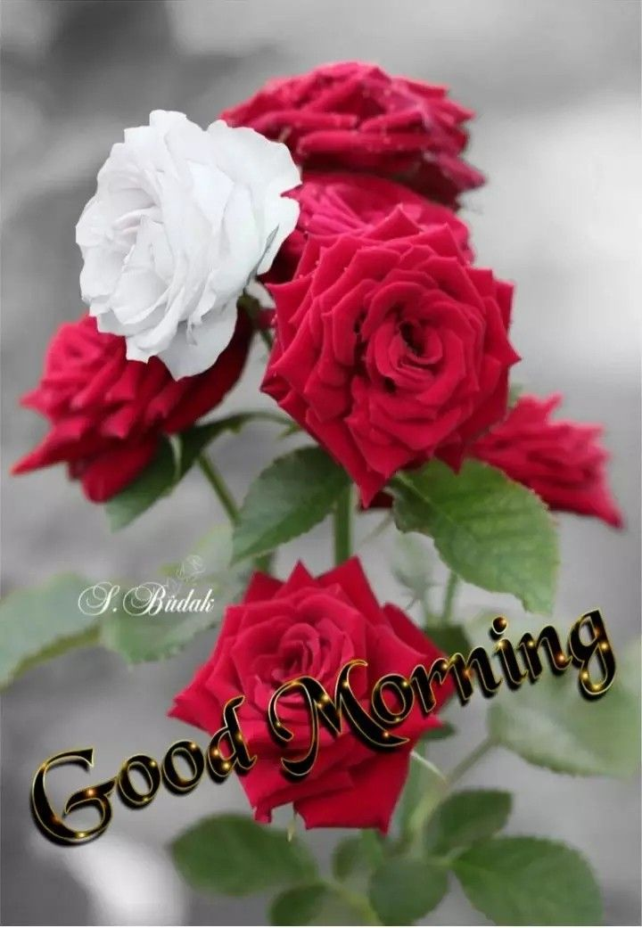 Aleem Khan Morning Images Good Morning Flowers