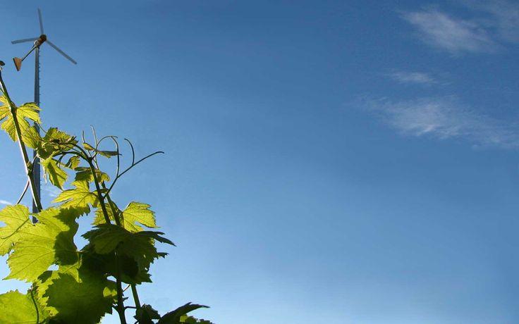 Regular Tours and Large Groups   Shinn Estate Vineyards and Farmhouse
