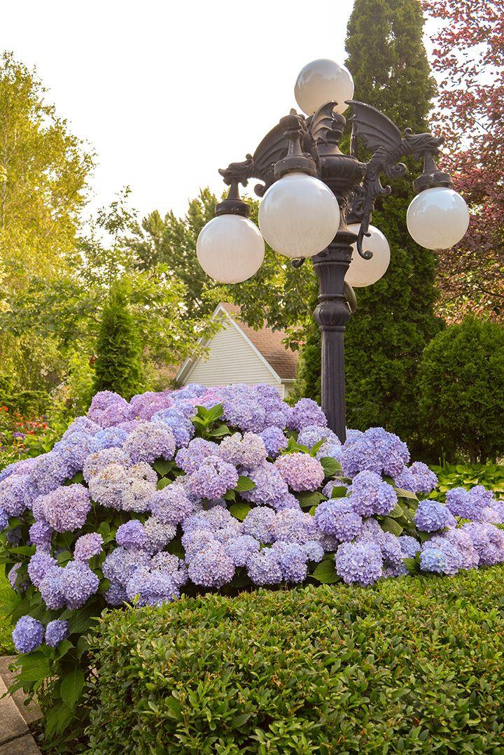 Flower Garden Ideas Wisconsin best 10+ wisconsin landscaping ideas ideas on pinterest | drought