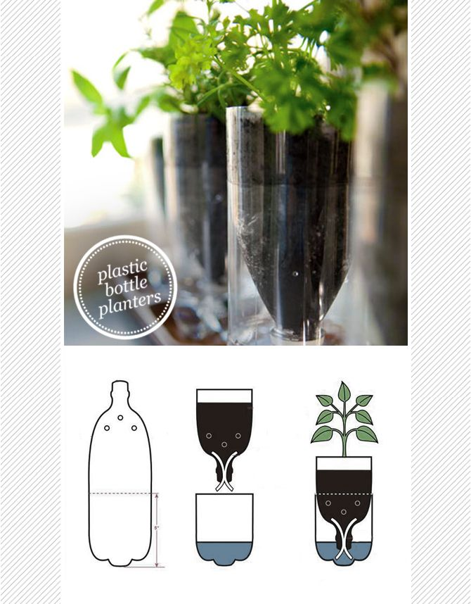DIY upcycled plastic bottle herb planter