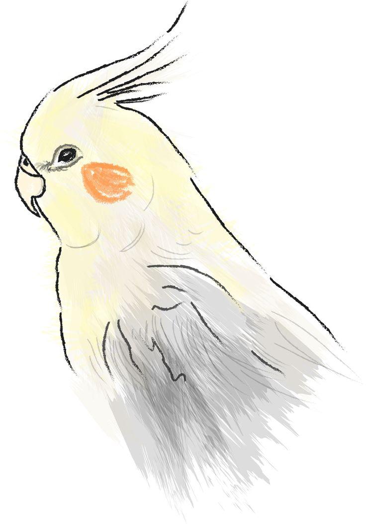 pre-rielaborazione digitale  www.cs4rt.com #calopsite #pappagallo #disegno #disegnodigitale