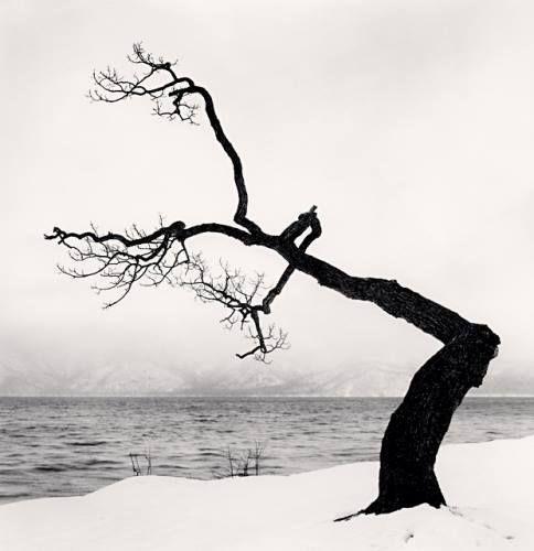 Michael Kenna :: Kussharo Lake Tree, Study 15, Kotan, Hokkaido, Japan, 2009