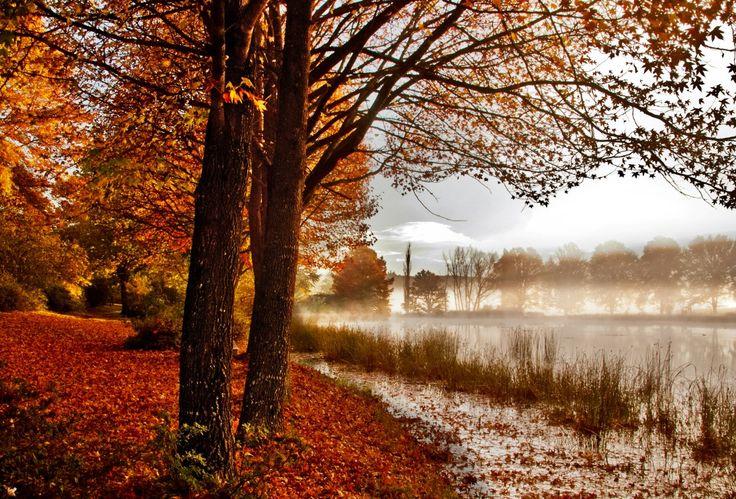 Autumn leaves & mist #Photography http://www.n3gateway.com/news5/14/151/Stephen-Pryke/d,detail.htm