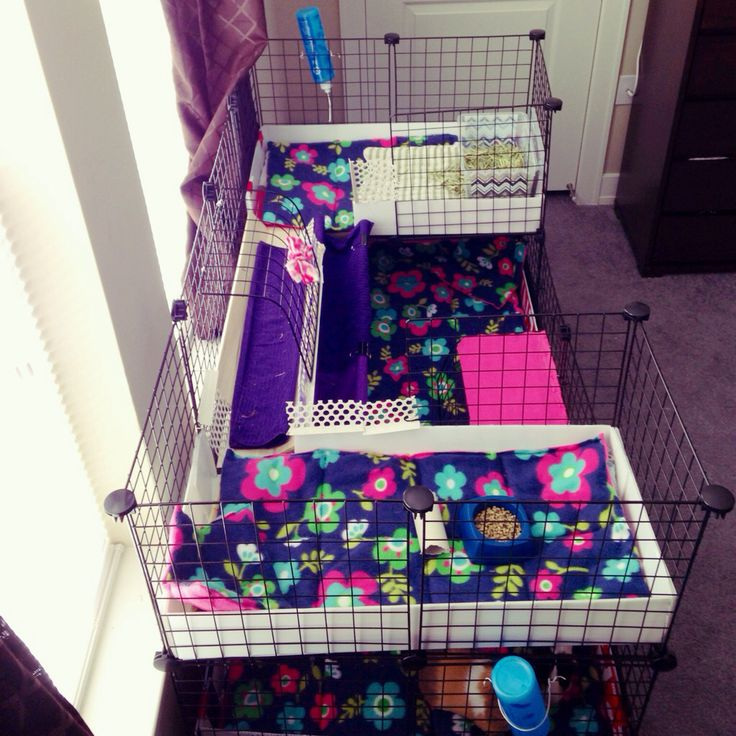 C&C guinea pig cage. 2x4 base with two 2x1 lofts. # guineapigs #piggiepigpigs #homesweethome