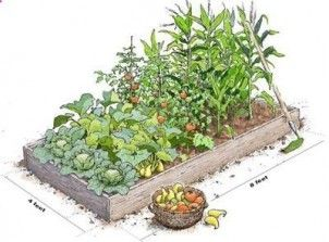 Raised Garden Beds: How to Build Raised garden beds are fairly easy to construct and even easier to maintain. Here is advice on how to build raised garden beds for your backyard.