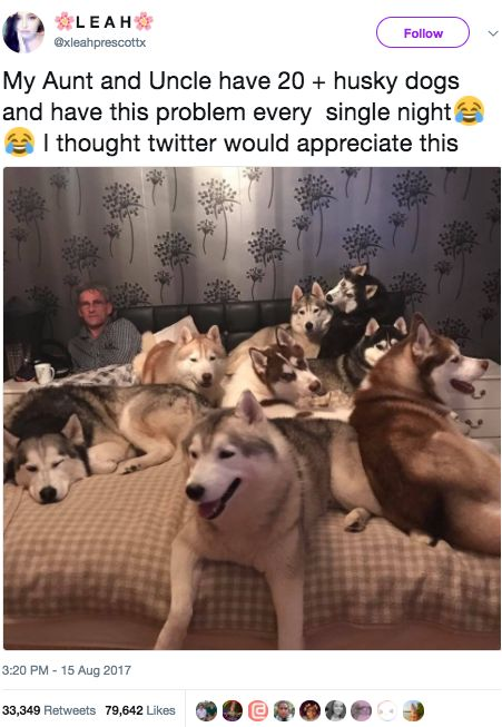 Best Funny Animal Pictures Images On Pinterest Dogs Funny - A pregnant doggo was given her very own baby shower and twitter is in love