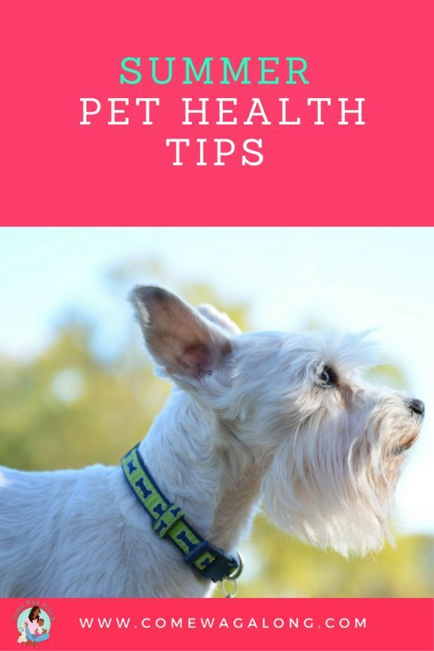 should we treat pets as our We do not lock up non-aggressive animals for manifesting the symptoms of their disease, we take them to the vets, we must take our children, brothers and sisters, mothers and fathers to quality rehab.