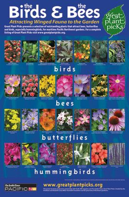 The Bee Plants And The Birds On Pinterest