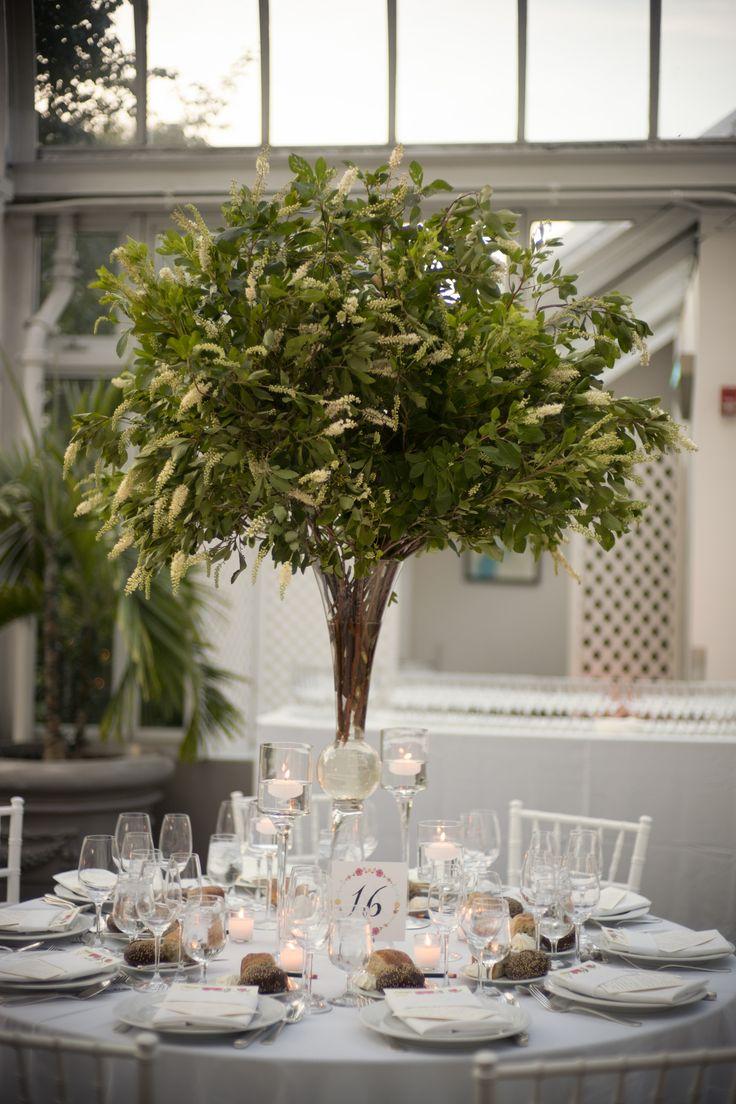 12 Best Lit Ficus Tree Project Images On Pinterest Ficus