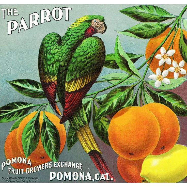 Pomona, California - The Parrot Brand Citrus - Vintage Label (Acrylic Serving Tray)
