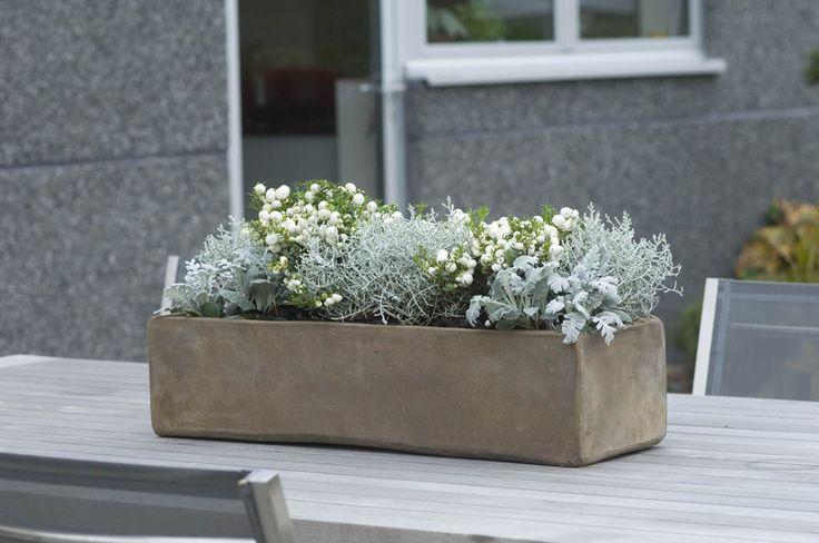 Einde van de zomer ... Enkele tips om je bloembakken ook in de herfst te vullen....